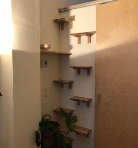 Shelves – 2/2020